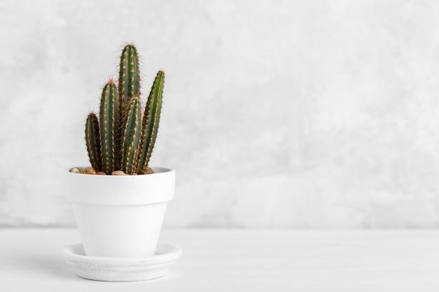 Piccolo cactus decorativo