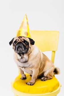 Piccolo cane adorabile in cappello di compleanno che si siede sulla sedia