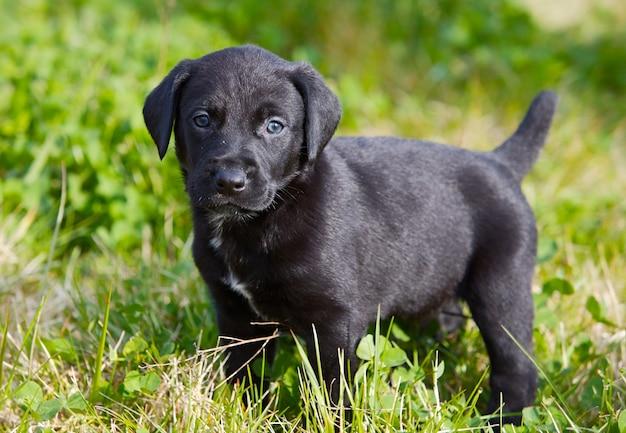 Piccolo cane adorabile sull'erba verde