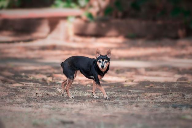 Piccolo cane nel parco