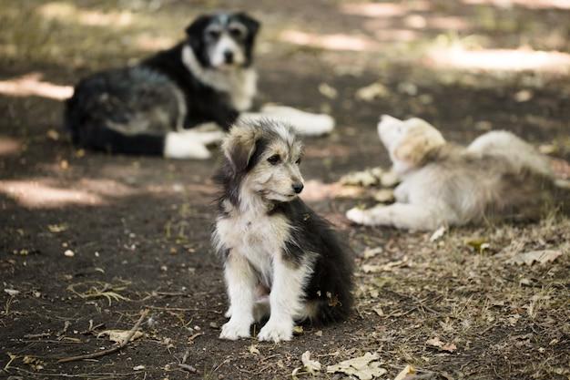 Piccolo cane randagio senzatetto all'aperto
