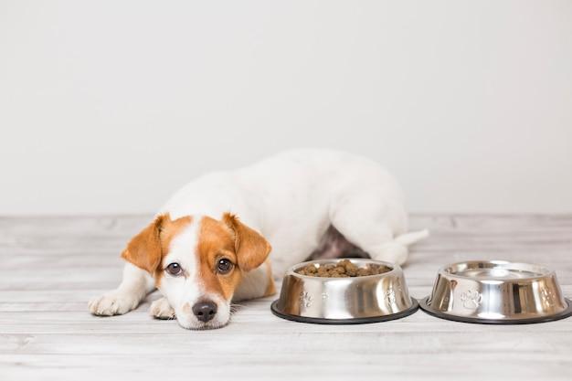 Piccolo cane sveglio che si siede e che aspetta per mangiare la sua ciotola di cibo per cani