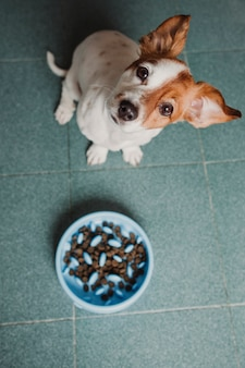 Piccolo cane sveglio pronto da mangiare il suo cibo per cani