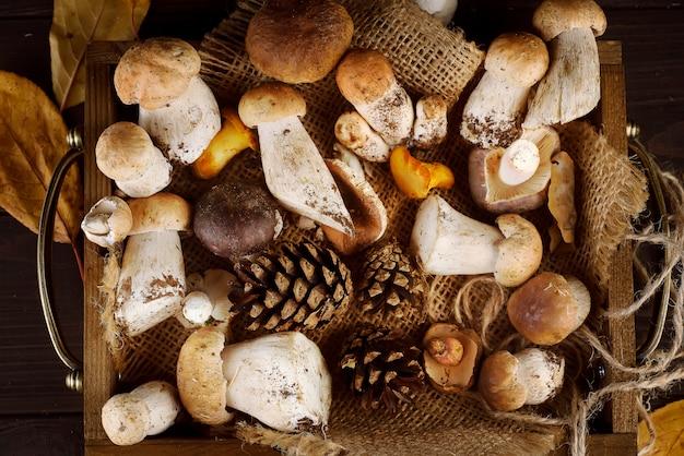 Piccolo cestino con funghi autunnali