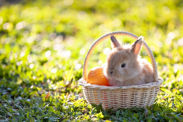 Piccolo coniglietto sveglio nel canestro e nelle uova di pasqua nel prato