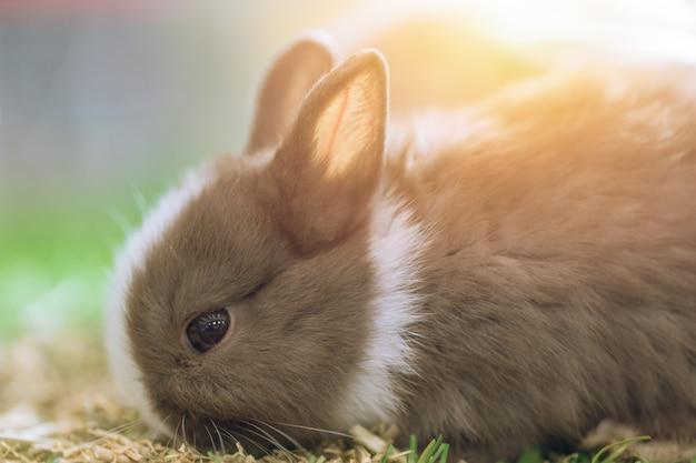 Piccolo coniglio carino su erba verde