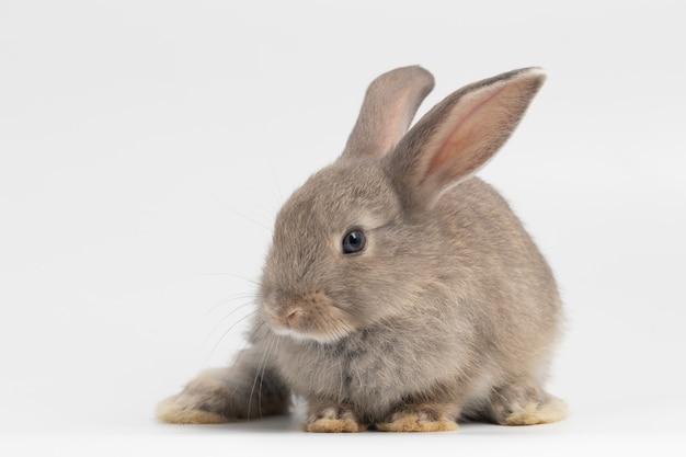 Piccolo coniglio che si siede sulla priorità bassa bianca isolata allo studio.