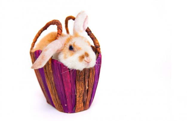 Piccolo coniglio di coniglietto di colore arancione e bianco sveglio in cestino di vimini isolato su bianco