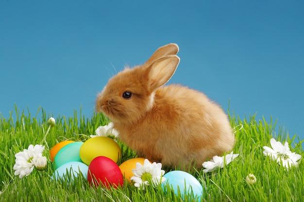 Piccolo coniglio ed uova di pasqua in erba verde con cielo blu. concetto di vacanze di pasqua.