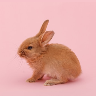 Piccolo coniglio lanuginoso rosso sulla superficie rosa. concetto di vacanze di pasqua