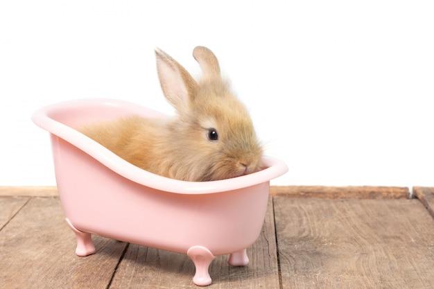 Piccolo coniglio marrone sveglio nella vasca da bagno rosa sul pavimento di legno