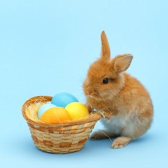 Piccolo coniglio rosso birichino, con uova dipinte sulla superficie blu. concetto di vacanze di pasqua