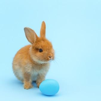 Piccolo coniglio rosso birichino, con uovo dipinto di blu sulla superficie blu. concetto di vacanze di pasqua