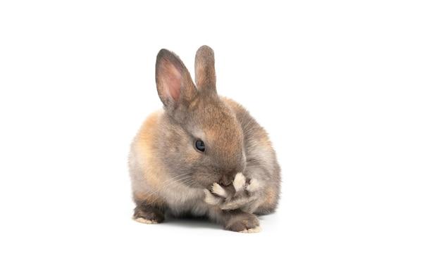 Piccolo coniglio sveglio su chiaro fondo concetto di pasqua di festa.