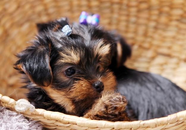 Piccolo cucciolo carino a casa