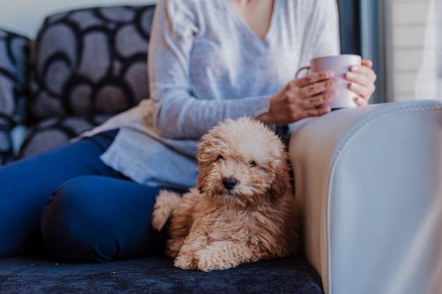 Piccolo cucciolo di barboncino sveglio che si siede sul sofà a casa, mentre il suo proprietario di donna che ascolta la musica, copia lo spazio - immagine