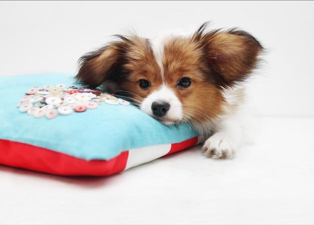 Piccolo cucciolo su un letto