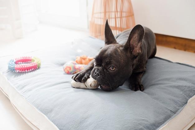 Piccolo cucciolo sveglio che gioca con i suoi giocattoli