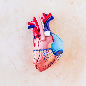 Piccolo cuore umano in plastica sul tavolo luminoso