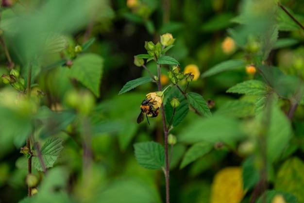 Piccolo fiore giallo
