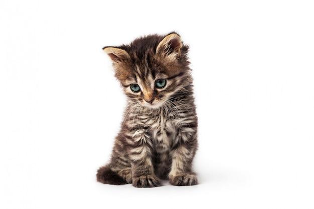 Piccolo gattino a strisce sveglio isolato su fondo bianco