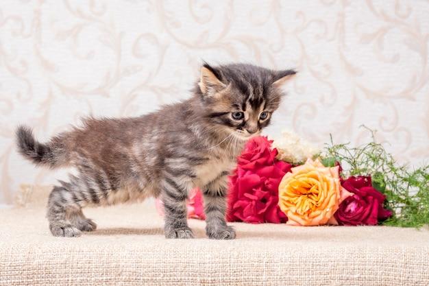 Piccolo gattino a strisce vicino a un mazzo di rose. buon compleanno