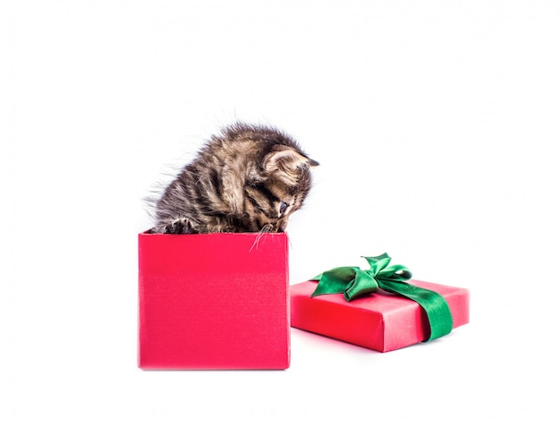 Piccolo gattino del tabby in un contenitore di regalo rosso con un arco