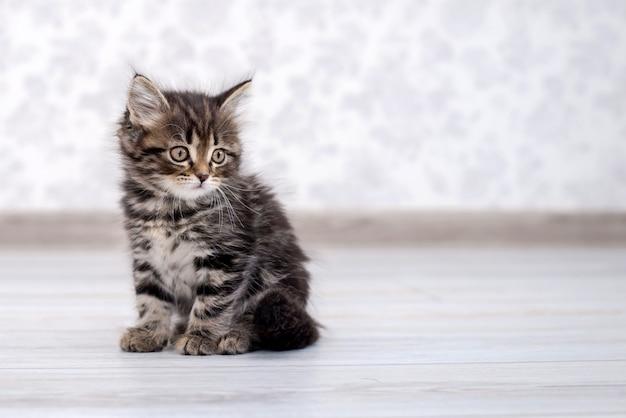 Piccolo gattino divertente sul pavimento