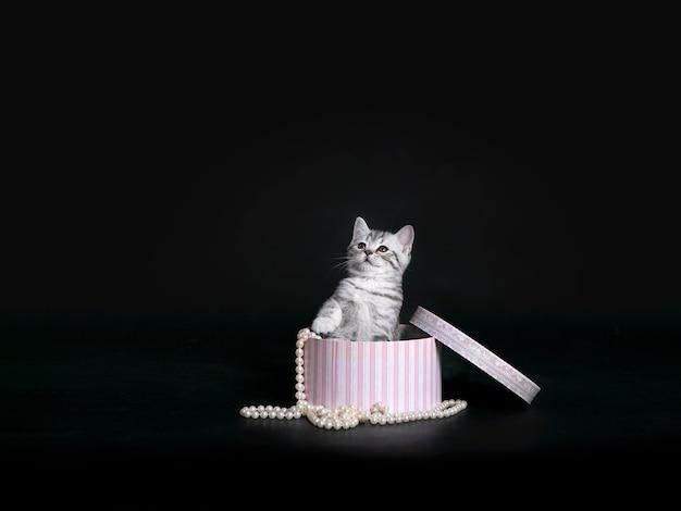 Piccolo gattino in un contenitore di regalo su una parete nera