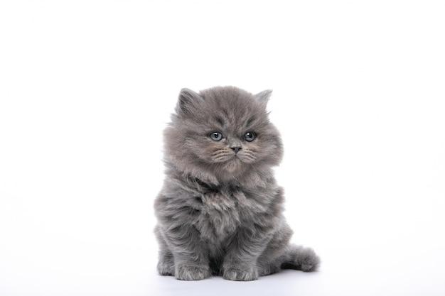 Piccolo gattino nero che si siede su un bianco isolato