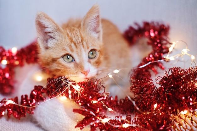 Piccolo gattino rosso che gioca nelle decorazioni di natale
