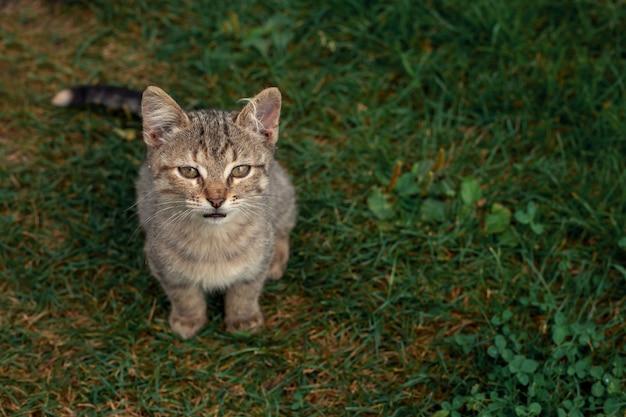 Piccolo gattino seduto nell'erba