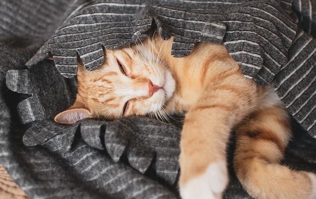 Piccolo gattino sveglio dello zenzero che dorme in coperta grigia