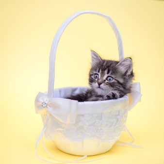 Piccolo gattino sveglio in un cestino bianco