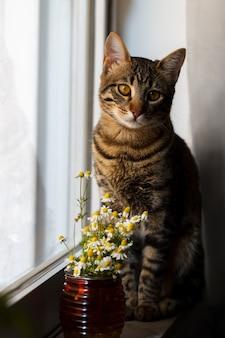 Piccolo gatto del bengala con margherita