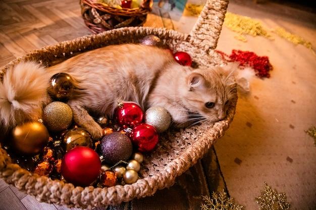 Piccolo gatto dello zenzero piacevole che dorme su un canestro con la decorazione di chrismtas