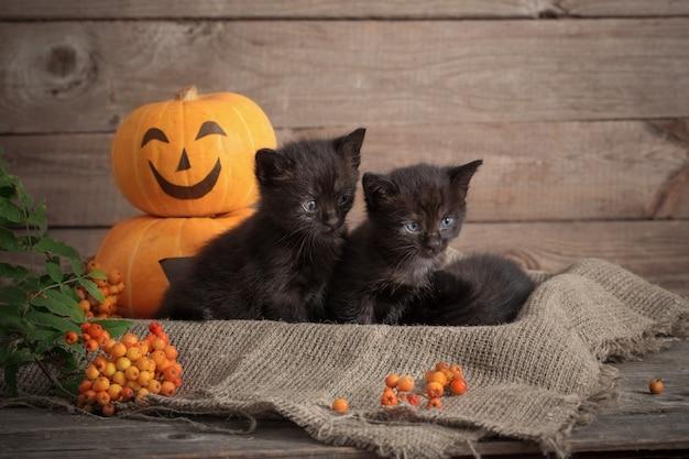Piccolo gatto nero con zucche di halloween