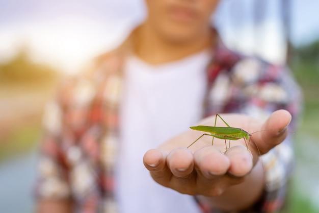 Piccolo insetto verde sulla mano del contadino e mostrando insetto ancora vivo nella sua fattoria