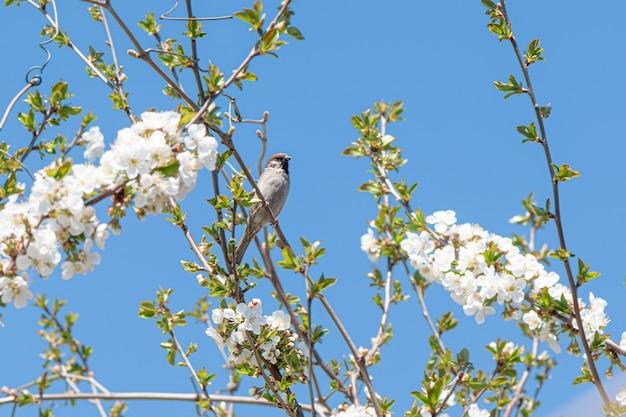 Piccolo passero seduto su un ramo