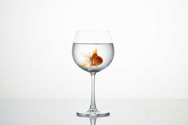 Piccolo pesce rosso che si muove in bicchiere di vino d'acqua