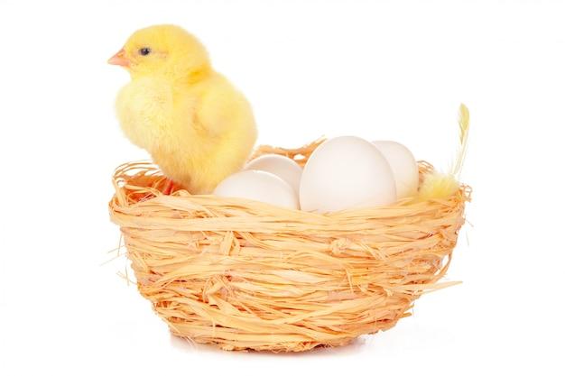 Piccolo pulcino e uova nel nido, isolato sul bianco
