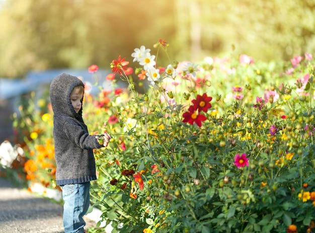 Piccolo ragazzino che gioca con i fiori