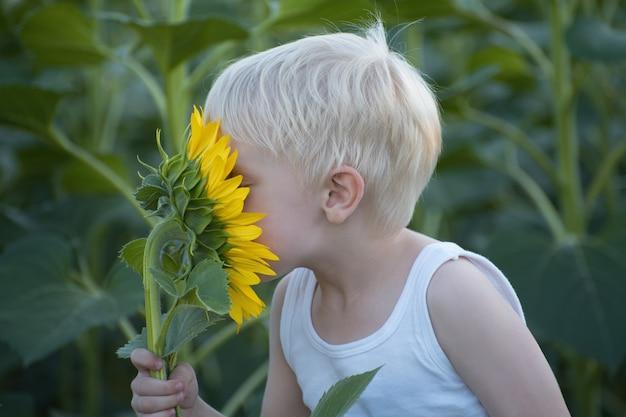 Piccolo ragazzo biondo felice che fiuta un fiore del girasole su un campo verde. avvicinamento.