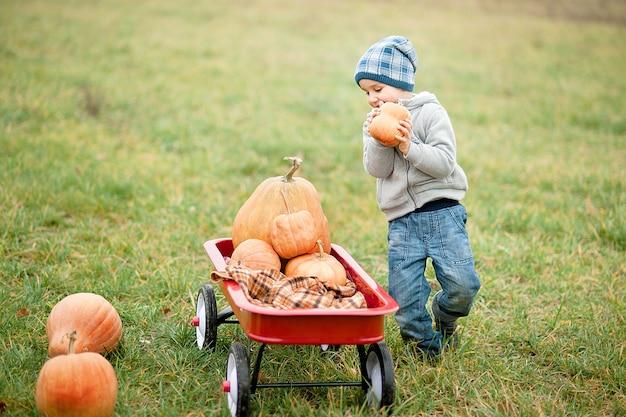 Piccolo ragazzo felice del bambino sulla toppa della zucca il giorno freddo di autunno