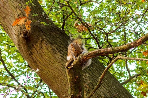 Piccolo scoiattolo che mangia sul ramo di un albero