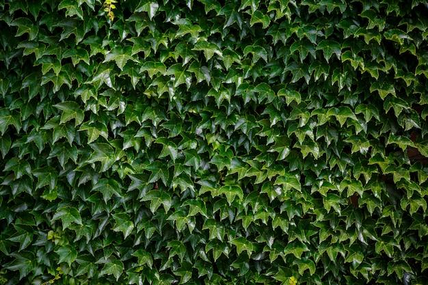 Piccolo sfondo di foglie verdi.