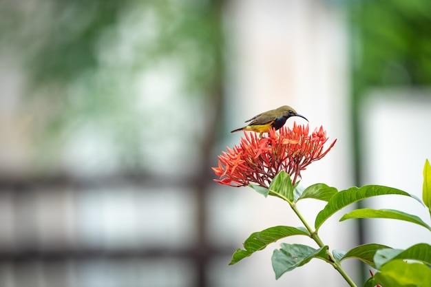 Piccolo uccellino è in piedi e mangia carpello di fiore rosso a punta.
