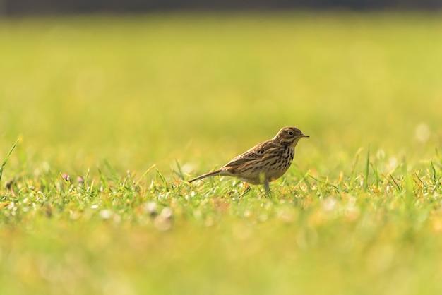 Piccolo uccello selvatico