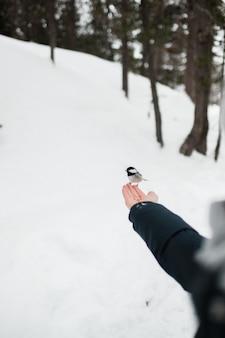 Piccolo uccello sveglio che si appollaia sulla mano della ragazza in inverno