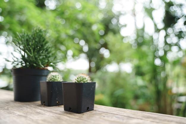 Piccolo vaso di piante alla finestra in legno